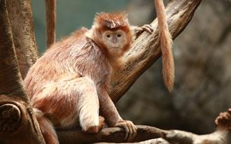 גן החיות של דבלין - Dublin Zoo